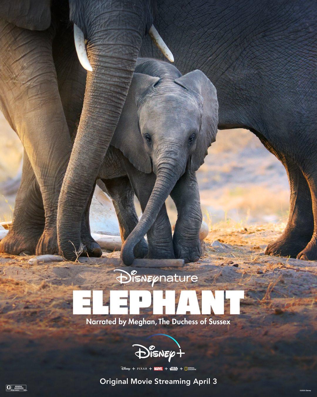 Elephant (2020) HD